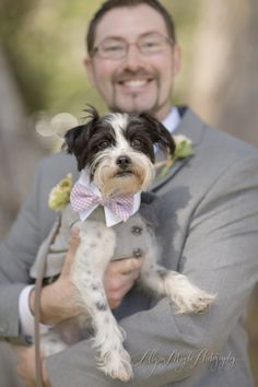 Fritz the pup!  ring bearer   Wedding & Portrait Photographer in San Luis Obispo :: Allyson Magda Photography - ... - coco + todd, charming pt 16, big sur wedding