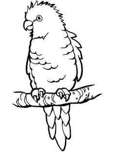 perched parrot coloring page from parrots category select from 24104 printable crafts of cartoons