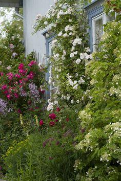Våryre hagefolk — Fredholm
