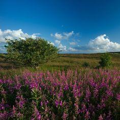 Morsum auf Sylt: Buchen Sie Ihren Nordseeurlaub
