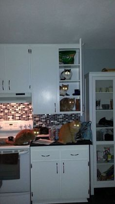 15+ Hilarious Times Animals Were Caught Red-Handed
