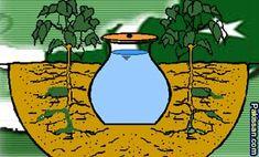 Pitcher irrigation: a water saving technique