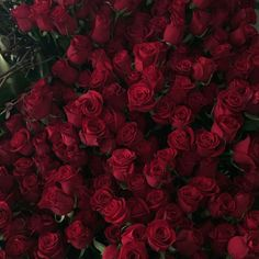 aesthetic, flowers, and red aesthetic image Burgundy Aesthetic, Aesthetic Roses, Half Elf, Lizzie Hearts, Rose Hathaway, Nate River, Jolie Photo, Red Color, Burgundy Color