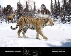 Panthera tigris acutidens by Rom-u.deviantart.com on @DeviantArt