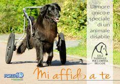 adozione-cani-disabili-mi-affido-a-te-lega-nazionale-difesa-cane-640x452.jpg (640×452)