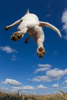 Flying bully!