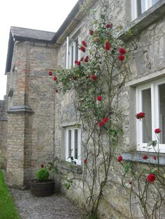 Roses at Cahir Castle, County Tipperary, Ireland.
