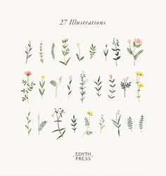 Botanical Clipart Wildflower Hand Drawn Flowers Watercolor Png Flowers Clip A . - Botanical clipart wildflower hand drawn flowers watercolor png flowers clip art i - Art And Illustration, Illustration Herbes, Leaves Illustration, Floral Illustrations, Pattern Illustration, Diy Tattoo, Tattoo Hand, Wrist Tattoo, Tattoo Fonts