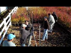 Blueberry Plant Varieties at DiMeo Blueberry Plant Nursery - Best Tasting Blueberry Varieties