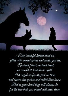 Pet Sympathy Card Dog Cat and Horse Card - horse animal horses riding freedom Horse Poems, Horse Riding Quotes, Pet Loss Quotes, Dog Quotes, Karma Quotes, Pet Loss Grief, Dog Loss, Inspirational Horse Quotes, Pet Sympathy Cards