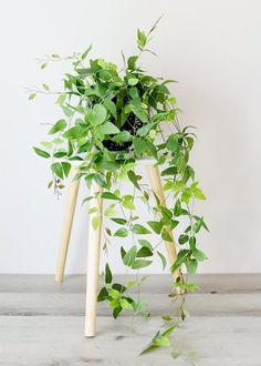 Elevate any living space with faux greenery and artificial plants that look real! Style in your favorite vase or plant in a terracotta pot. Enjoy the beauty of plants without the maintenance. Shop trending faux greenery and artificial plants at Afloral.com.