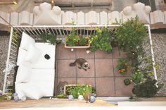 Balcony Garden. Note to self: Do this.