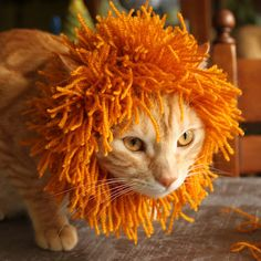 londonleo: Cat's Mane (pattern on Ravelry) I don't know if I dare make one for our cats but I'm tempted!