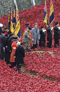 Tower of London - 13-year-old cadet Harry Hayes planted the final ceramic poppy at the Tower of London this morning to mark Armistice Day 11th November 2014