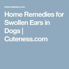 Home Remedies for Swollen Ears in Dogs | Cuteness.com