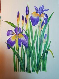 보타니컬색연필화, 붓꽃(아이리스) : 네이버 블로그 Iris Painting, Thread Painting, Fabric Painting, Painting On Wood, Watercolor Flowers, Watercolor Art, Composition Art, Colored Pencil Techniques, Lilac Flowers
