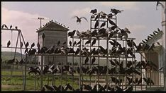 "The crows begin to assemble on the play equipment behind the local school in Hitchcock's ""The Birds"" (1963)."