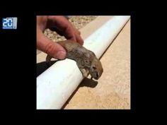 Il sauve un écureuil de la noyade