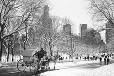 Beautiful black and white photos of central park in New York City