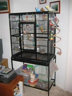 I love the boings on this cage .the moldable braided perches Diy Bird Cage, Bird Cages, Parakeet Care, Cockatiel Cage, Budgies, Parrots, Oddly Satisfying Videos, Conure, Pet Birds