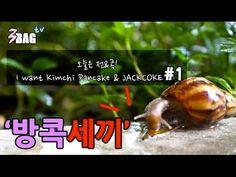 [방콕세끼] 전&잭콕의 조합은?? || Kimchi Pancake & Jackcoke!