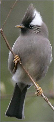 China posee una gran diversidad de aves, en gran medida atribuida a la variedad de paisaje físico y las condiciones ecológicas vistas en su vasto territorio Tales áreas crean hábitats ideales para muchas especies diferentes de aves que viven, se...