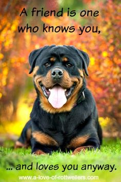 Rottweilers are the ultimate companion - loyal, protective, smart. The best friend you'll ever have.