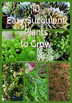 10 Easy succulent plants to grow. I have compiled a list from the ones I grow.