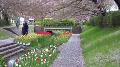 flower pathway ***