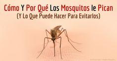 Los mosquitos hembra se alimentan de sangre humana porque necesitan proteína y otros componentes para producir sus huevos. http://articulos.mercola.com/sitios/articulos/archivo/2015/08/16/porque-pican-los-mosquitos.aspx