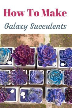 Everything you need to know about succulents! DIY, gardens, how to take care of, terrariums, and decor.