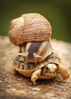 """""""HEY!  Slow down!  I wanna get there, but I wanna get there ALIVE!"""""""
