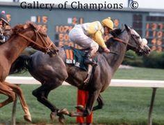 1982 - Gato Del Sol - 108th