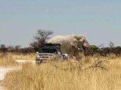 Etosha Manfred, Elephant, Animals, Pictures, National Forest, Germany, World, Viajes, Animales