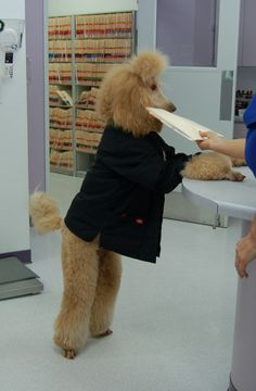 """""""Dezire helps out at the clinic where her Mom is a veterinarian."""""""