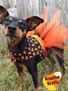 Candy Corn Halloween Dog Costume   Dog TUTU dress by KreativeKraftzzz on Etsy https://www.etsy.com/listing/469695348/candy-corn-halloween-dog-costume-dog