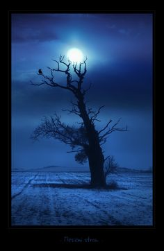 - Moontree - by UNexperienced.deviantart.com