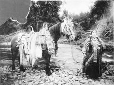 "Celia Tellier, ""The Belle of the Flatheads,"" early twentieth century; Nez Perce National Historical Park"