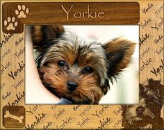 Yorkie Laser Engraved Wood Picture FrameItem is Fragile and will be shipped Priority Mail with InsuranceFree Shipping to the United States Wood Picture Frames, Picture On Wood, Laser Engraved Gifts, Wall Plaques, Yorkie, Laser Engraving, Priority Mail, Teddy Bear, United States