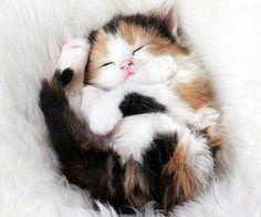 Imagem de cat, cute, and kitten