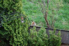 Garden in villa Toscana
