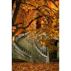 Path of Artemis ❤ liked on Polyvore featuring backgrounds, autumn, photos, pictures and fall