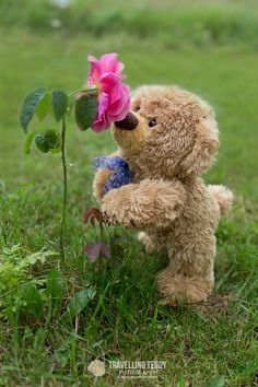 Love My Kids Quotes, Teddy Bear Pictures, Miniature Photography, You Are Cute, Love Bear, Cute Teddy Bears, Baby Kittens, Tatty Teddy, Belle Photo