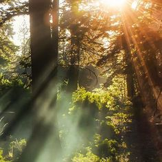 Wild Nature Forest Sun Ideas For 2019 Beautiful World, Beautiful Places, Beautiful Pictures, Terre Nature, Landscape Photography, Nature Photography, Photography Flowers, Photography Ideas, Wild Nature