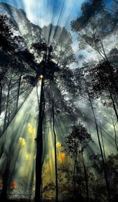 Sun ray forest Silhouette