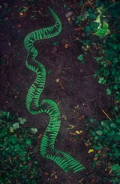 Andy Goldsworthy, Bracken stripped down one side pinned to ground with slivers of bracken stalks, 1982.