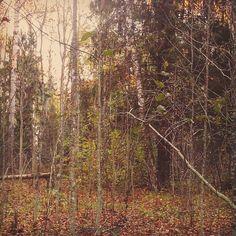 "reverie.walker: ""#пейзаж #природа #осень  #холод #грусть #печаль #одиночество #landscape #nature #autumn #fall  #evening #twilight #snow #town #sity #cold #sadness #loneliness #путешествие #прогулка #walk #journey"""
