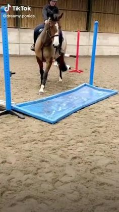 Funny Horse Videos, Funny Horse Memes, Funny Horse Pictures, Funny Animal Jokes, Funny Horses, Cute Animal Videos, Cute Horses, Cute Animal Photos, Animal Memes