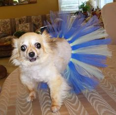 How to make a ballerina tutu for a dog. Love this! Gonna try this for my girls!
