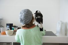 Penguin Bloom: how a scruffy magpie saved a family